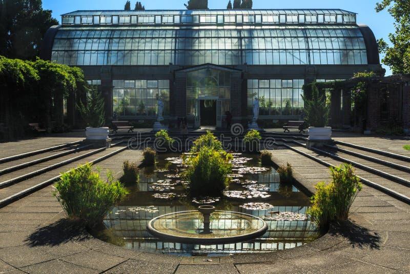 Wielki Szklarniany Backlit światłem słonecznym -- Auckland domena, NZ obraz royalty free