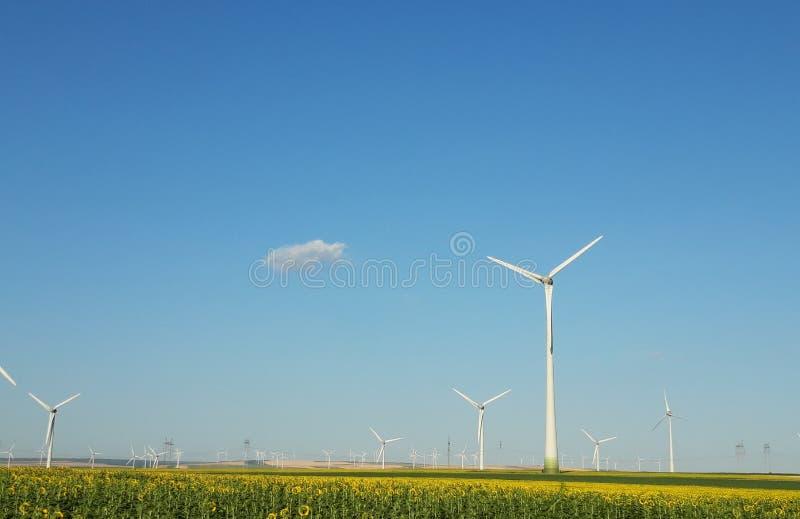 Wielki widok na wiatraczkach na polu obrazy stock