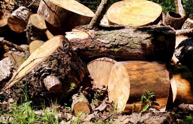 Wielki Woodpile Dla Leśnego przemysłu Duże świerczyn bele i sosna drewno broguję kłaść fotografia royalty free