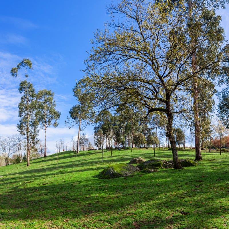 Wielki zielonej trawy gazon, drzewa i granitowi głazy w Parque da Devesa miasta Miastowym parku, fotografia stock