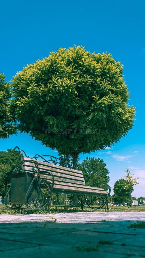 Wielki zielony drzewo w parku obok drewnianej ?awki Pi?kny ogr?d, lato krajobraz fotografia royalty free