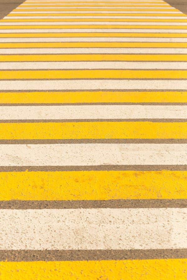 Wielki zwyczajny skrzyżowanie pasiasty żółty i białego zdjęcia royalty free
