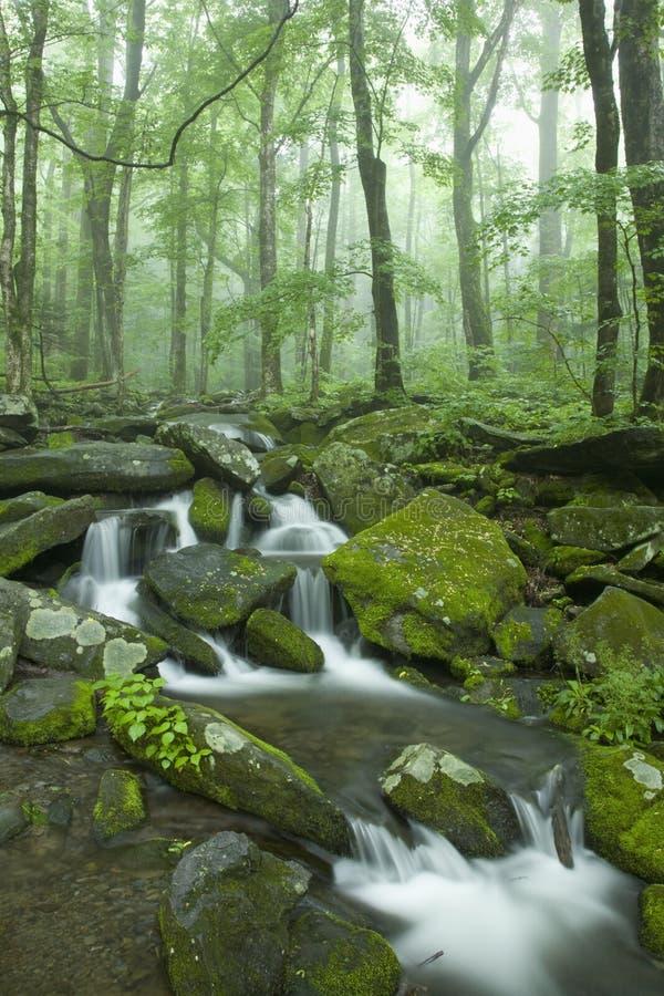 wielkich krajobrazowych mtns np dymiący wiosna strumień zdjęcie royalty free