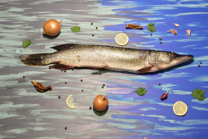 Wielkie świeże ryby leżące na niebieskim i szarym tle, posortowane składnikami i przyprawami do gotowania zdjęcia royalty free