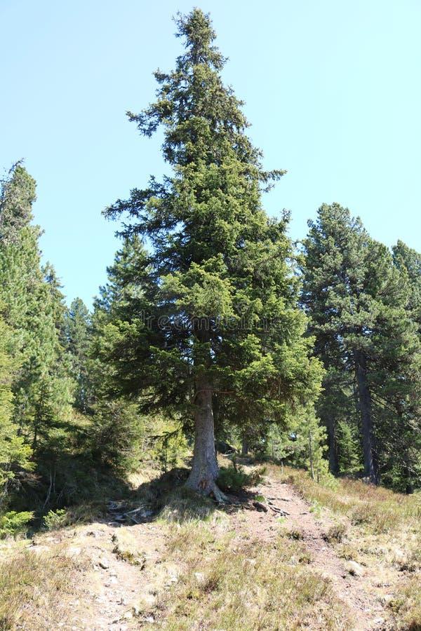 wielkie drzewo obraz stock
