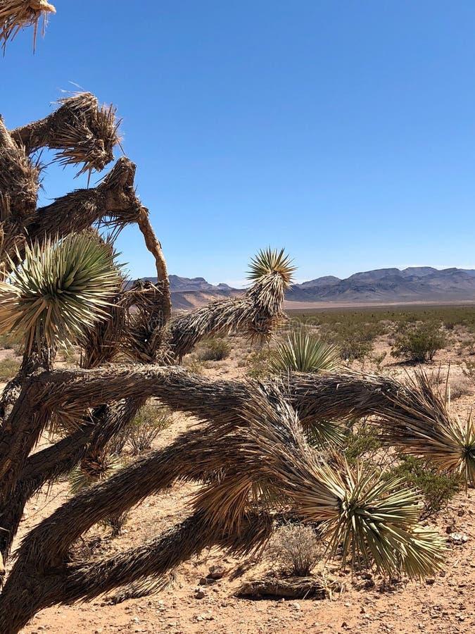 wielkie miasto pustyni galerii krajobrazy martwych więcej moich poprzednich panorama sunset różnice drzewna pracy zdjęcie royalty free