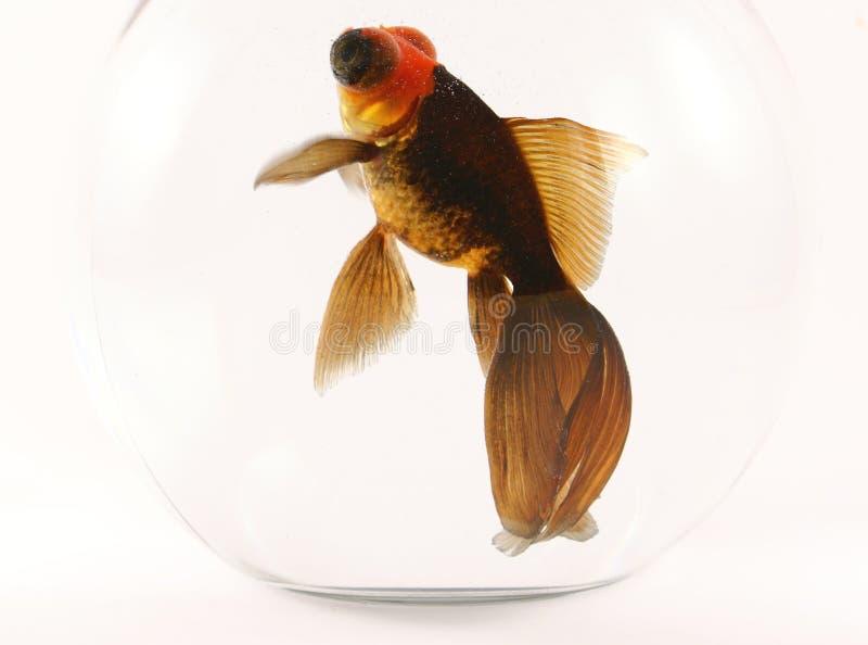 wielkie oko ryb fotografia royalty free