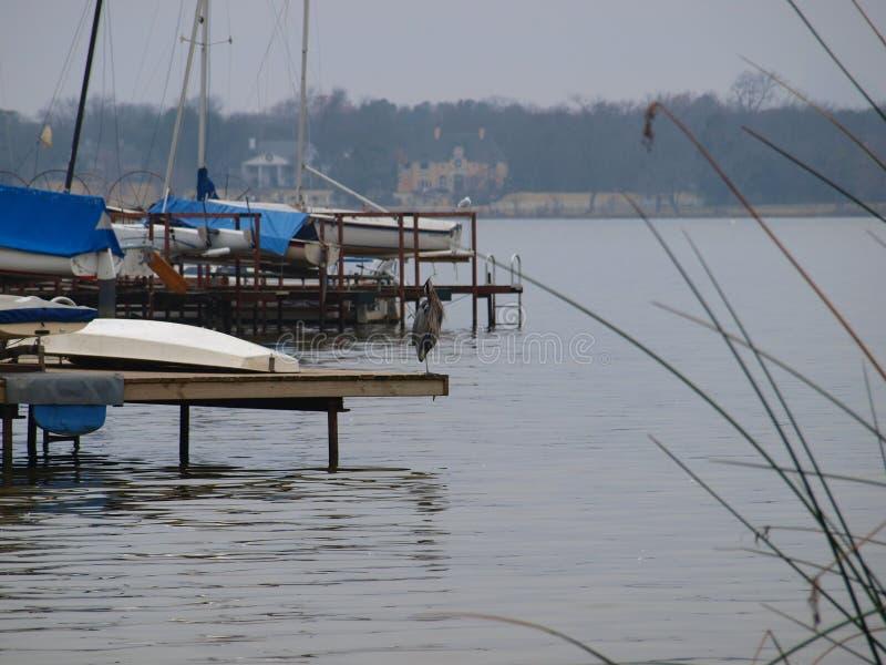 Wielkiego błękita czapla Destressing Po rybołów wizyty zdjęcie stock