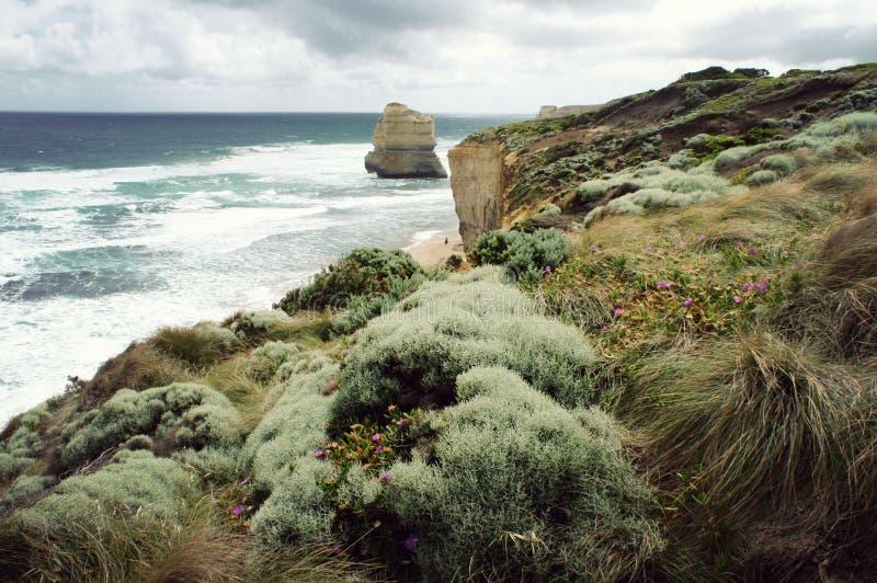 Wielkiego oceanu Drogowa droga w Wiktoria, Australia zdjęcie stock