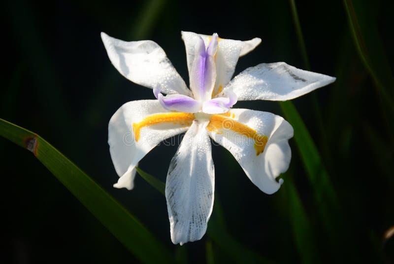 Wielkiego Piątku kwiat zdjęcie stock