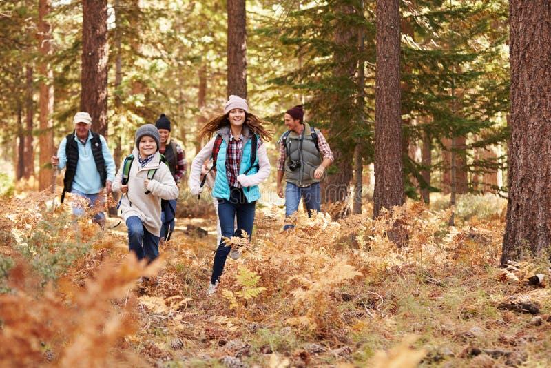 Wielo- pokolenie rodzina wycieczkuje w lesie, dzieciaków biegać obraz stock