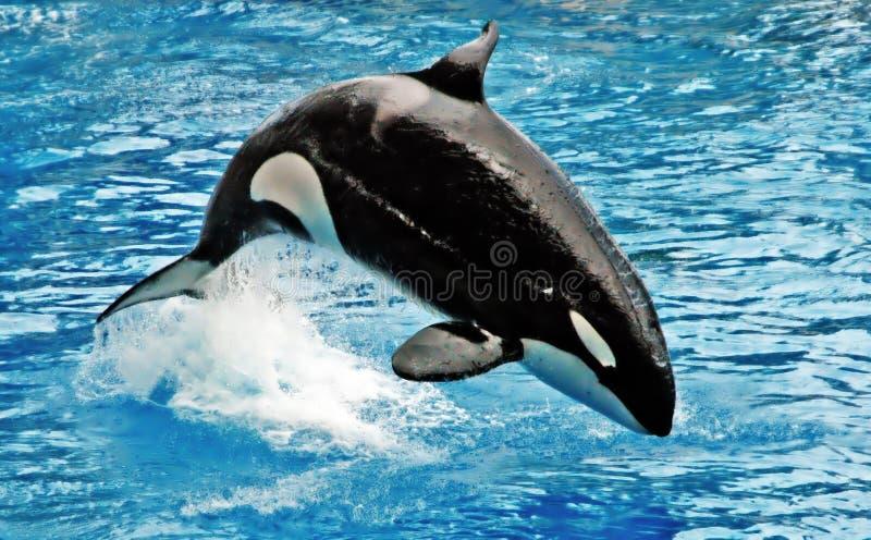 wieloryb zdjęcia stock