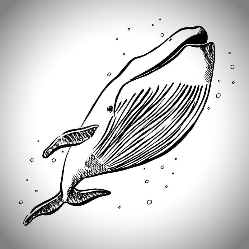 Wieloryb z bąbla graficznym nakreśleniem; wektorowa ilustracja EPS10 zdjęcia stock