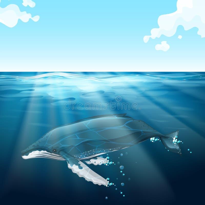 Wielorybi dopłynięcie pod błękitnym morzem ilustracja wektor