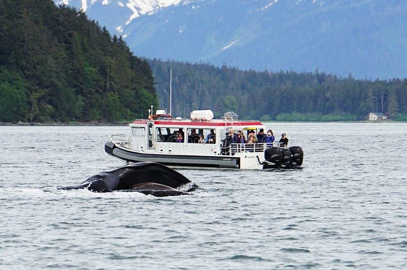 Wielorybi dopatrywanie, humpback wieloryby w Alaska zdjęcia stock