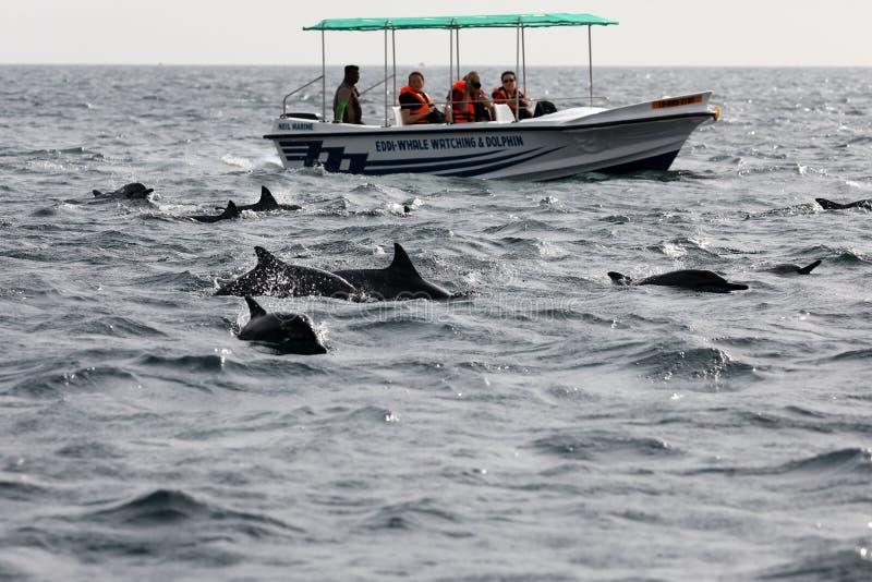 Wielorybi dopatrywanie przy Trincomalee w Sri Lanka obrazy stock