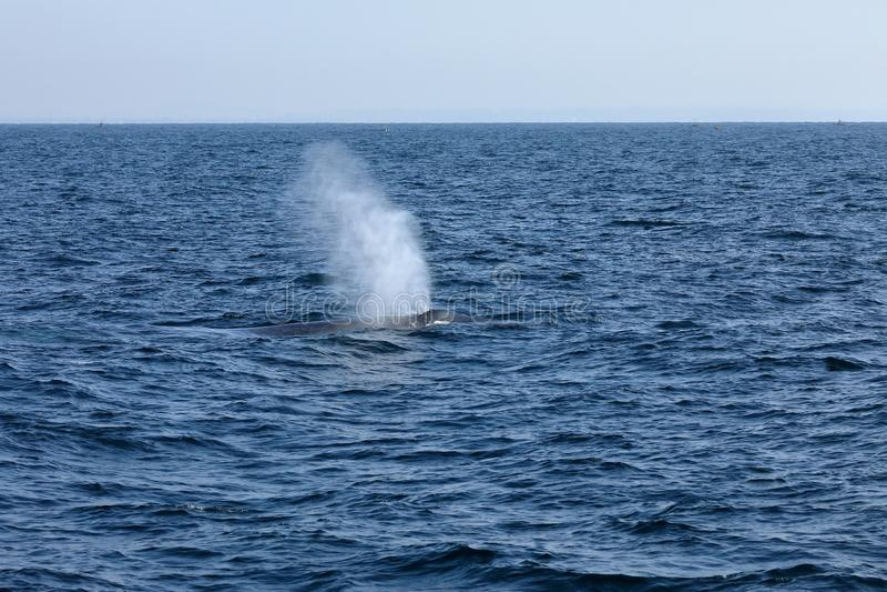 Wielorybi dopatrywanie w Sri Lanka obrazy stock