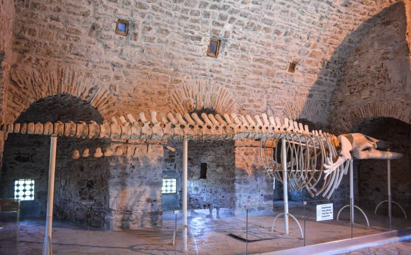 Wielorybi kościec w forcie przy Gołębią wyspą w Kusadasi, Turcja zdjęcia stock