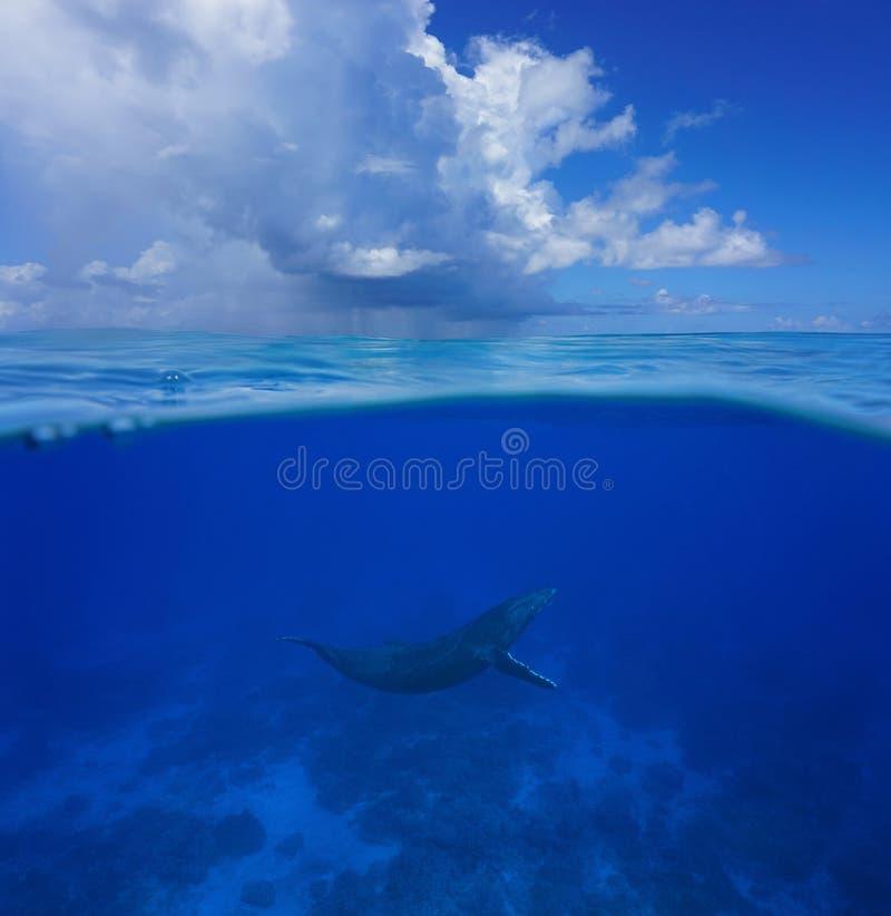 Wielorybi podwodny morze rozszczepiający z chmurnym niebieskim niebem fotografia stock