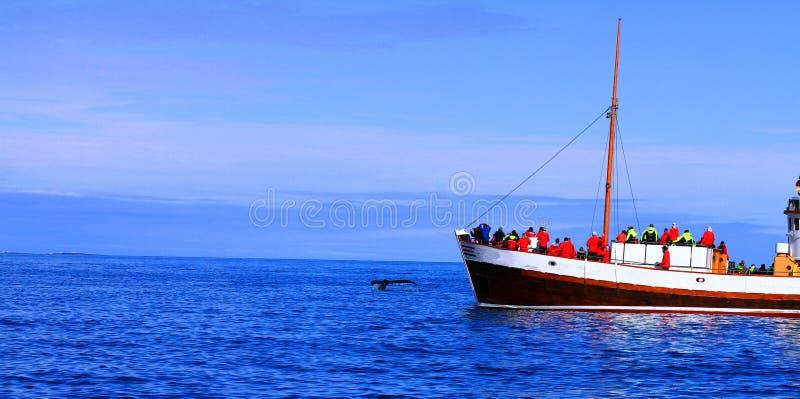Wielorybia dopatrywanie wycieczka, Lipiec 2017, Iceland obraz royalty free