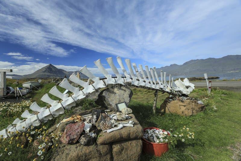 WIELORYBIE kości, kościec NA ICELAND zdjęcia royalty free