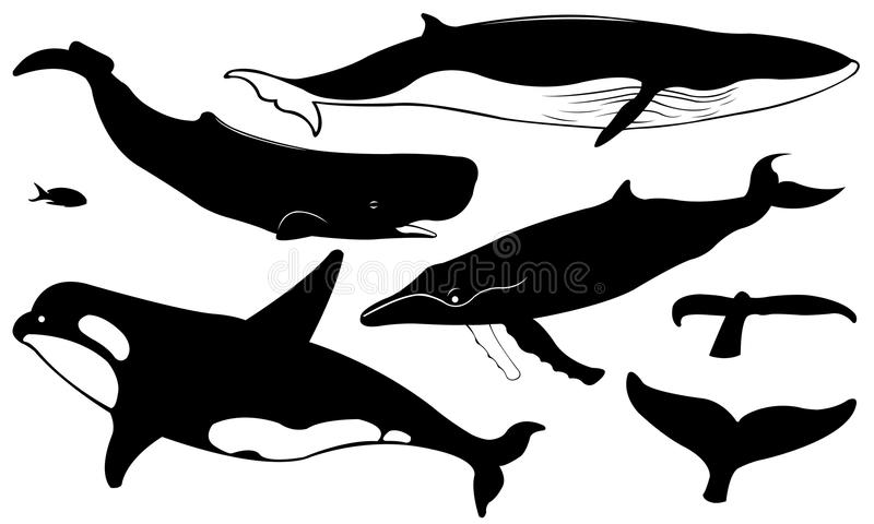 Wieloryby ilustracja wektor