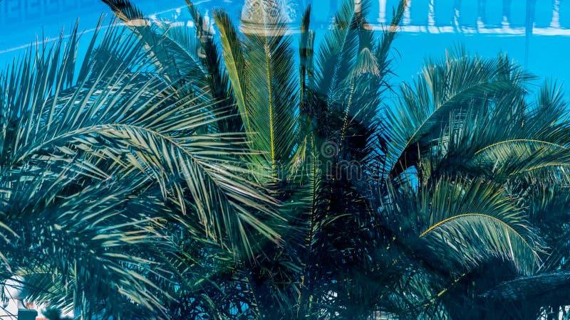 Wieloskładnikowe palmy obrazy royalty free