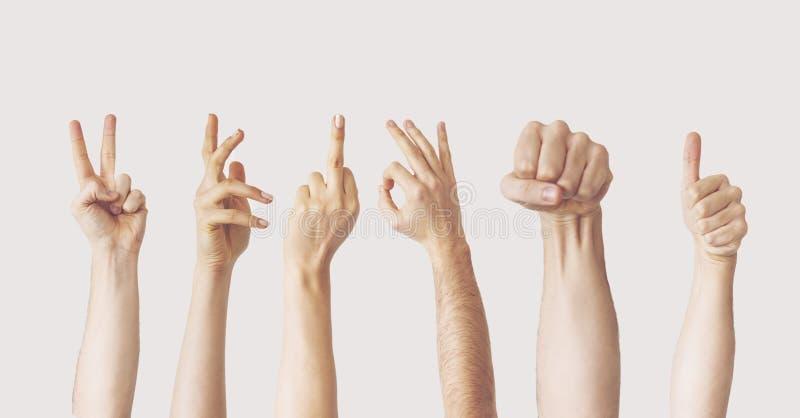 Wieloskładnikowi żeńscy ręka gesty na szarym tle fotografia stock
