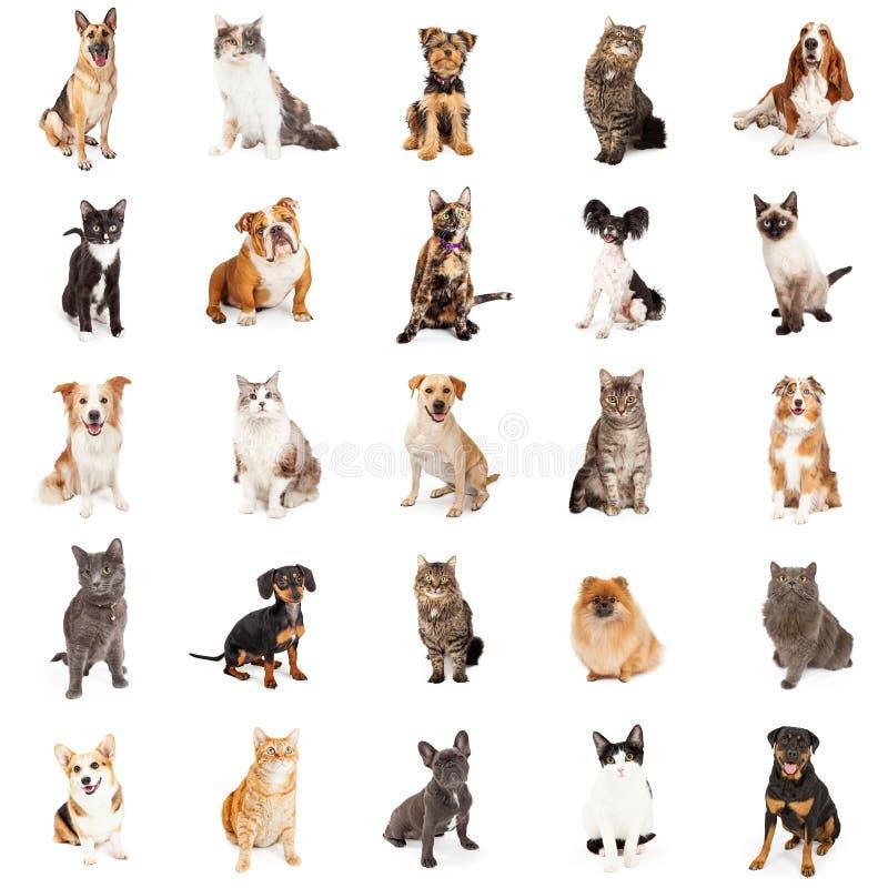 Wielostrzałowy wzór koty i psy obraz royalty free