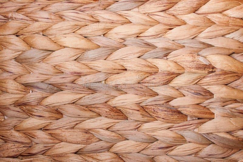 Wielostrzałowy wzór wodny hiacynt jako tło - szczegół zdjęcie royalty free