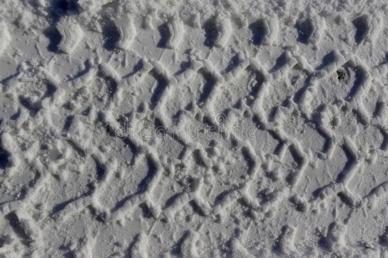 Wielspoor in de sneeuw stock afbeeldingen