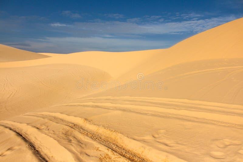 Wielsporen op de duinen stock foto's