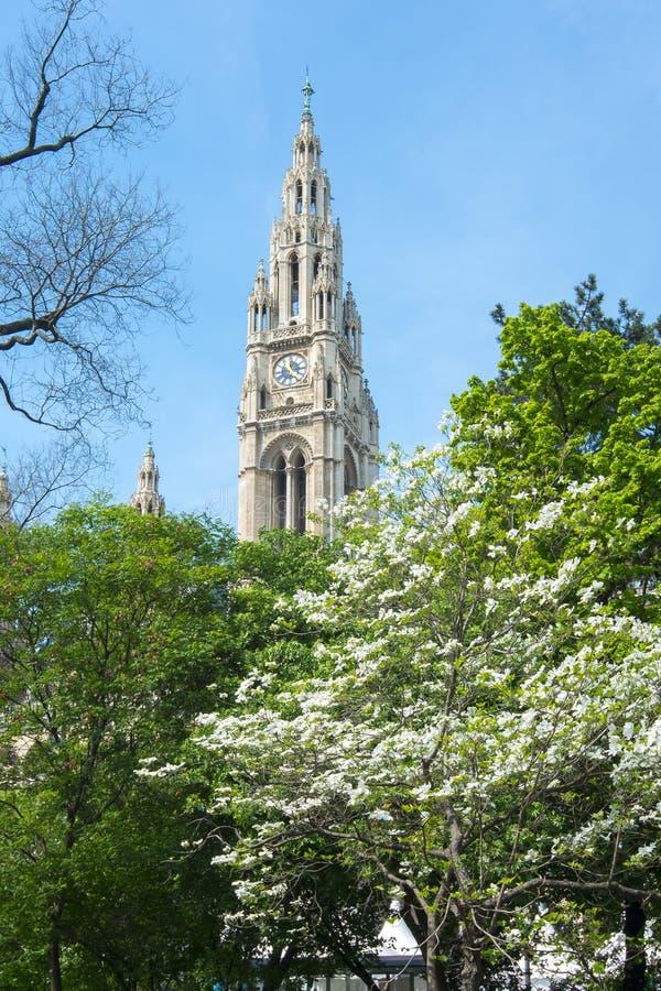 Wien stadshus i våren, Österrike arkivbild