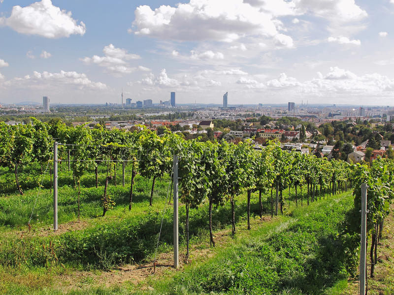 Wien - Stadt des Weins lizenzfreie stockfotografie