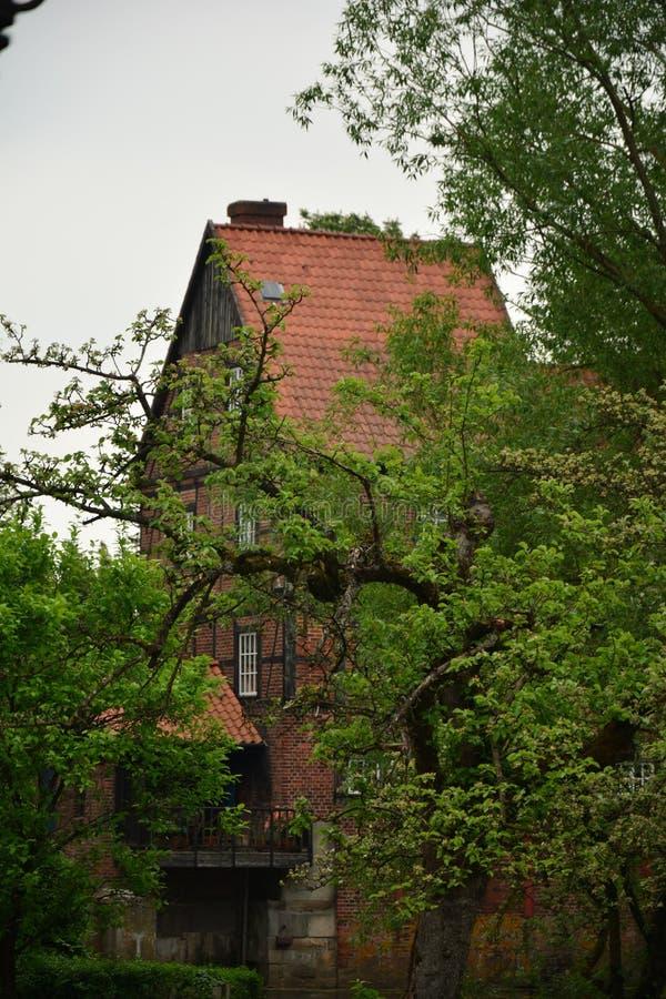 Wienhausen miasteczka Niemcy parka drzewny kwiat fotografia stock