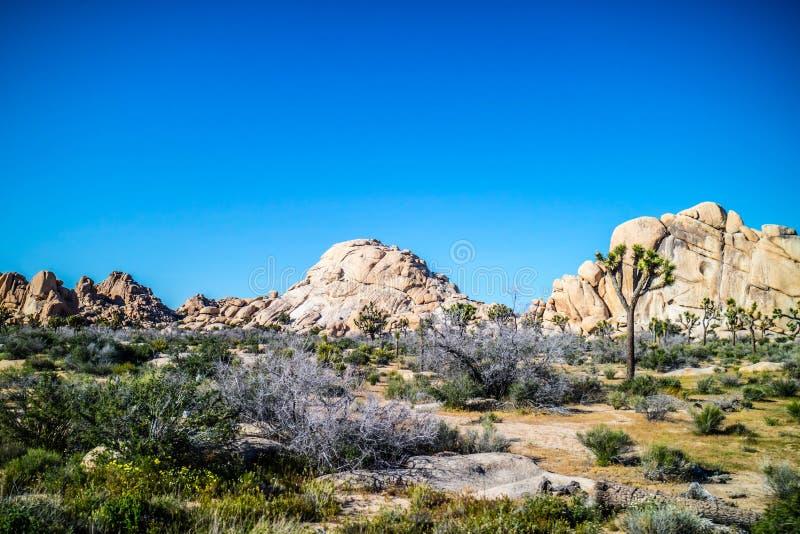 Wierzbowe dziur skały w Joshua drzewa parku narodowym, Kalifornia fotografia stock
