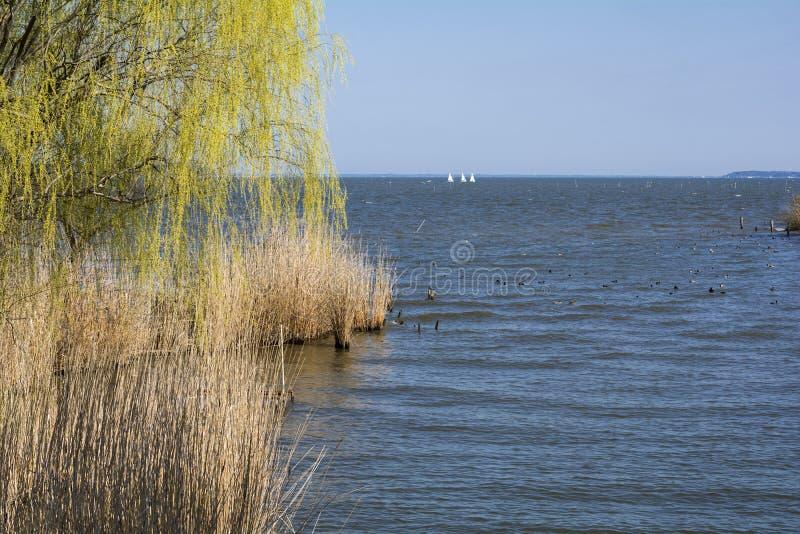 Wierzbowi drzewa i jezioro obraz stock