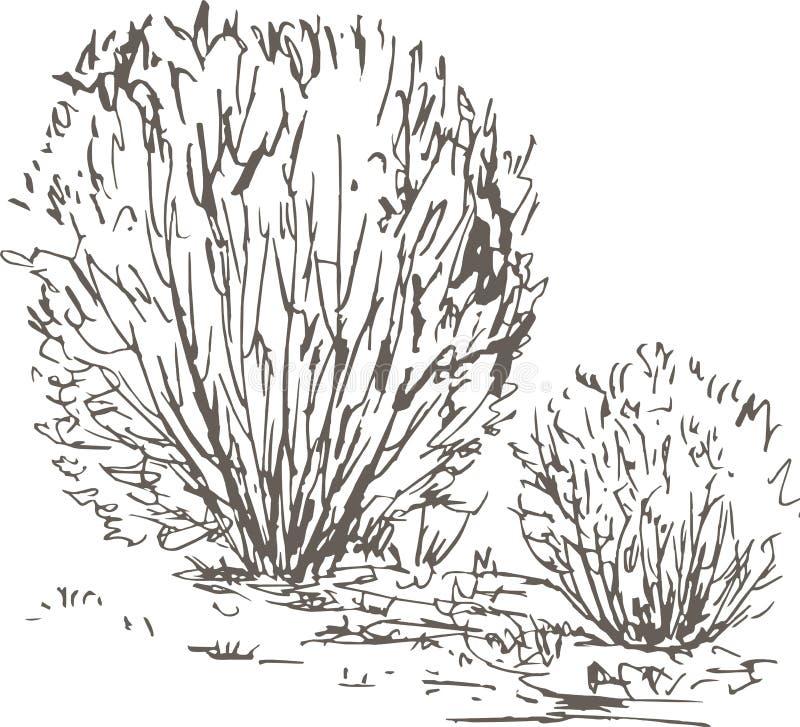 Wierzbowi krzaki z liśćmi i trawą royalty ilustracja