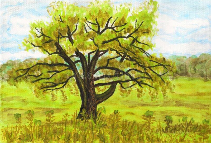 Wierzbowy drzewo, maluje ilustracji