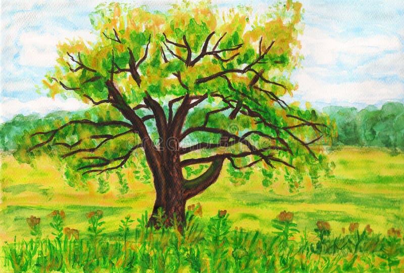 Wierzbowy drzewo, maluje royalty ilustracja