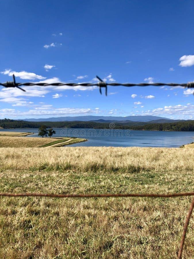 Wierzbowy gaju jezioro obraz royalty free