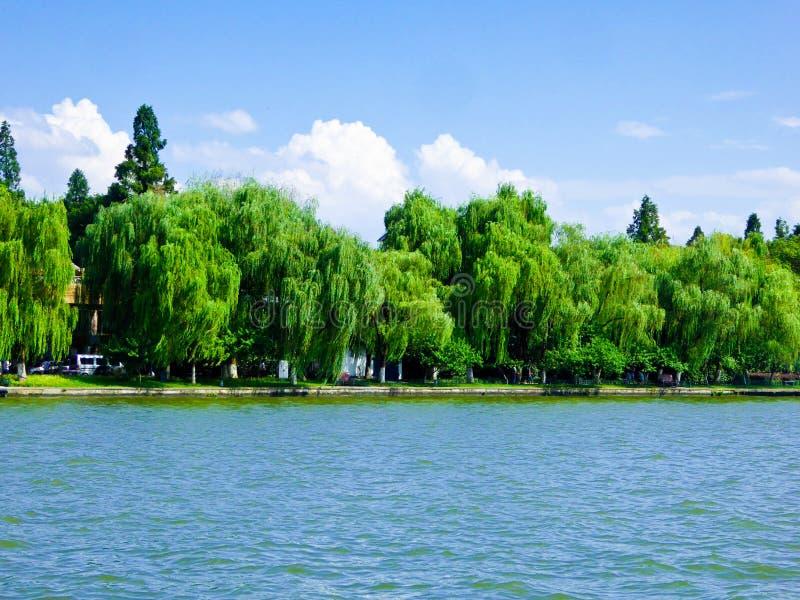 Wierzby Zachodnim Jeziornym Kulturalnym krajobrazem Hangzhou obraz stock