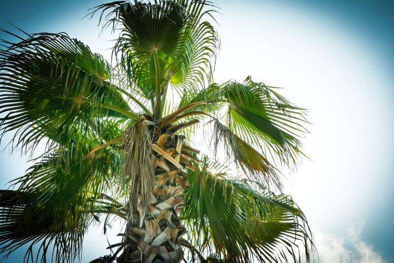 wierzchołek drzewko palmowe pod błękitnym słońcem fotografia stock