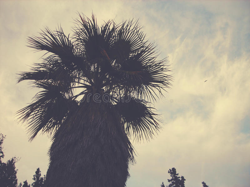 Wierzchołek drzewko palmowe przy półmrokiem, niskiego kąta perspektywa; zatarty, retro styl, zdjęcia royalty free