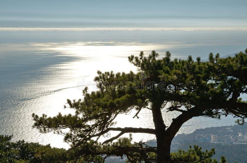 Wierzchołek drzewo przeciw tłu morze obraz stock