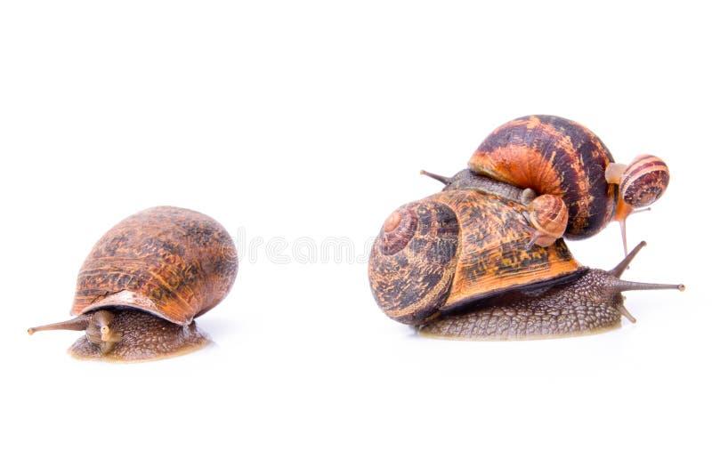 wierzchołek uprawia ogródek ślimaczka innego wierzchołek fotografia stock