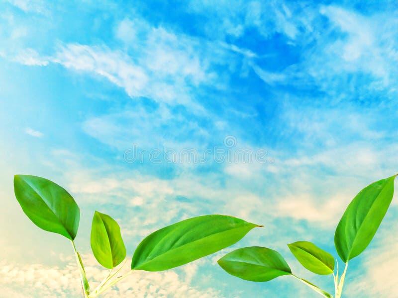 Wierzchołków liści zieleń na niebieskiego nieba tle obrazy stock