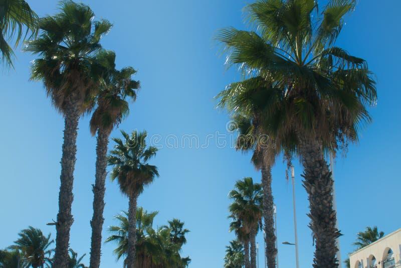 Wierzchołki palmy w dwa rzędach obramiają drogę zdjęcia stock