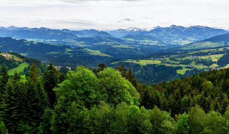 Wiese, Bäume und Alpen, Koblach lizenzfreies stockfoto