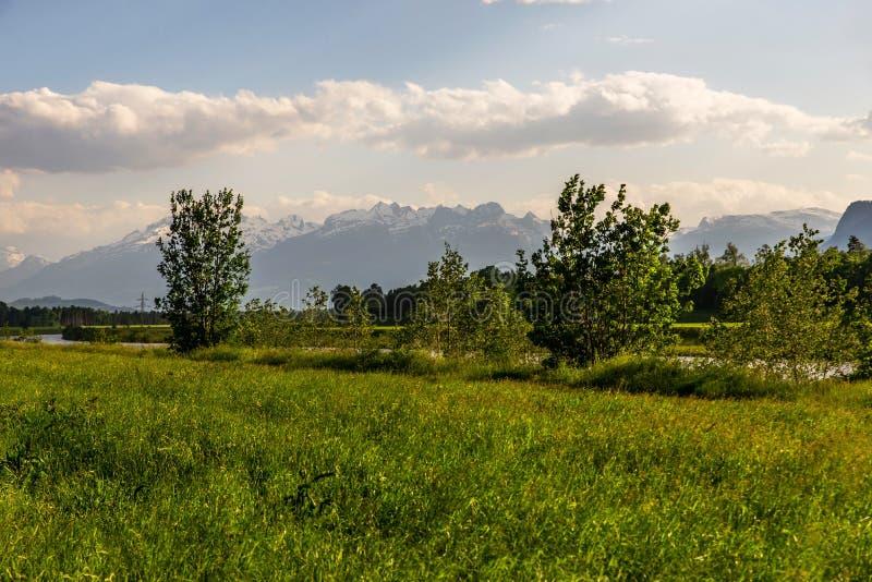 Wiese, Bäume und Alpen, Koblach lizenzfreie stockfotos
